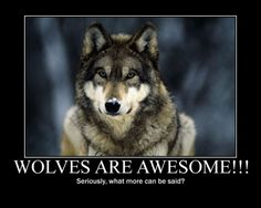 Indian Quotes About Wolves | animal black, pack, the pack, wolves, quotes, white, timber, lone wolf ...