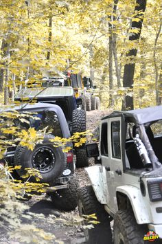 Trail life: Spending countless hours traversing various paths through the woods with like-minded people, simply because you can. It's a Jeep thing. _____________________________ #axleboy #offroad #jeepshop #missouri #ofallon #stlouis #stl #jeep #wrangler #lifted #trail #fall #4x4 #4wd #jeeplife #jeepbeef #jeepthing #olllllllo #outdoors #kcco #lifeisgood #traillife