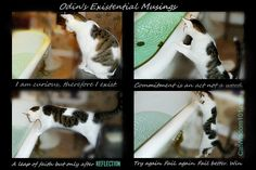Wordless Wednesday with Wonderful Odin!  I've been trying to see a shape in his markings. I know ones there!