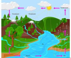 El ciclo del agua (Primaria) - Web del maestro Easy Science Experiments, Science Chemistry, Science Projects, Water Cycle Diagram, Opposite Words, Waves Vector, Water Drawing, Free To Use Images, Beautiful Rose Flowers