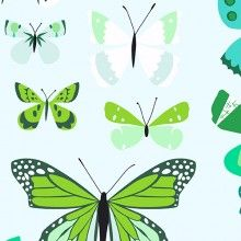 Natural History - Butterfly Box in Green