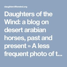 Daughters of the Wind: a blog on desert arabian horses, past and present  » A less frequent photo of the French-Tunisian stallion Ourour
