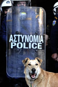 Loukanikos The Greek Riot Dog Street Dogs, Athens Greece, Cute Creatures, Stray Dog, Police, Greek, Animals, Hero, Counting