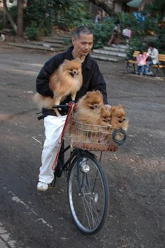Poms on a bicycle