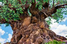 https://flic.kr/p/MV2rh9 | The Animal Carvings | Today's photo tour sends us to the Animal Kingdom for a shot of the Tree of Life. This tree always amazes me with all the different animal carvings it has all over it. Every time you look at it, you see something different that you didn't see before. Whats's your favorite animal on the Tree of Life? Have a magical Day!  Visit Disney Photo Tour on Facebook and Instagram