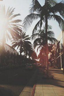 #palmy #słońce #summer