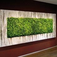 Moss Fashion, Moss Wall, Showroom, Interior, Green, Studio, Design, Home Decor, Plants