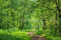 Photo: Path in the wood