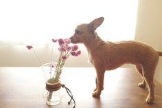Dry flower and Dog vol2 by AKIHIROFURUTA