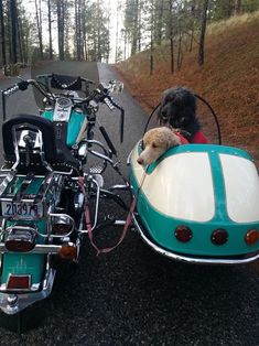 your motorcycles maryann duffeys doggie sidecar poodles Motorcycle Icon, Sidecar Motorcycle, Motorcycle Garage, Most Beautiful Dogs, Vintage Bikes, Vintage Cycles, Dog Carrier, Cute Animal Pictures, Harley Davidson Motorcycles