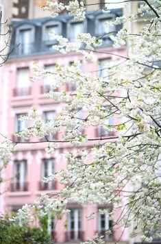 Paris Photograph April in Paris White Cherry