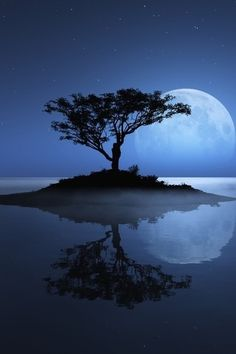 Phenomenal Reflection Pictures on Water blue moon tree Reflection Pictures, Moon Pictures, Pictures Of Water, Pictures Images, Bing Images, Calming Pictures, Travel Pictures, Art Images, White Photography