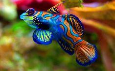 30 photos incroyablement vives de récifs coralliens, les écosystèmes à protéger