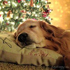 Una siestita esperando la Navidad ...
