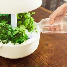 Soil-Free Indoor Smart Garden Design by Janne Loiske for Plantui Smart Garden by Plantui is an innovative, soil-free indoor gardening device. Now you can grow your own herbs and salads easily at… Hydroponic Gardening, Hydroponics, Indoor Gardening, Hydroponic Growing, Smart Garden, Balcony Plants, Eco Architecture, Grow Kit, Organic Vegetables