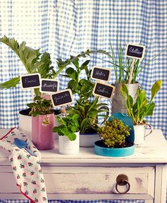Your little garden at home.  Bring a corner of your home to life with herbs that you can use in your everyday cooking.