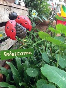 Stress da giardino #Welcom in my garden#Ladybug