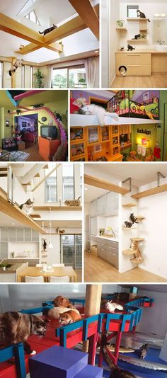 Kitty skyways. My cats could so get into these. I wonder if those brackets have been repurposed from something else, or if they need to be custom made?