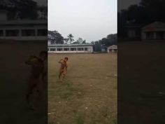 Bangladeshi Super human  6 years old Bangladeshi guy  New Bangla funny video 2017 http://youtu.be/-YgyJaPxDMc