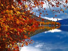 Standing on the shores of its namesake lake, Kastoria is a mix of old and new. Famous for its lake, Byzantine architecture, lush forests and its fur clothing industry. Byzantine Architecture, Make Arrangements, Hd Desktop, Greece Travel, Lush, Reflection, Tourism, Fur Clothing, Autumn