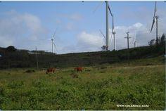 Mauka Ranches I