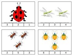 Insects Count & Clip Cards *Common Core Aligned*