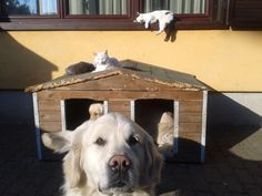 dogs and cats in the morning sun