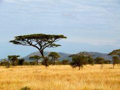 Take me back to Tanzania