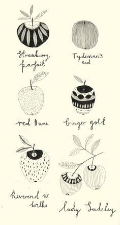 Apple guide. Katt Frank illustration.