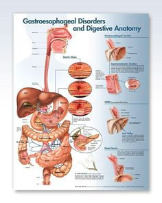 Gastroesophageal Disorders anatomy poster