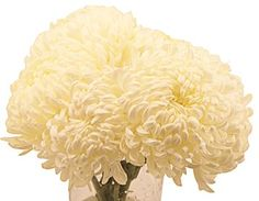 white football mums - bouquets or centrepieces