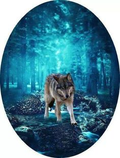 Wolf and Blue Forest Beautiful Creatures, Animals Beautiful, Cute Animals, Wolf Spirit, My Spirit Animal, Wolf Pictures, Animal Pictures, Wolf Images, Dream Pictures