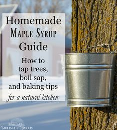 Homemade Maple Syrup Guide - How to Tap, Make Syrup & Baking