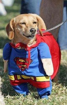 Perro VESTIDO de SUPERMAN. HUMOR GRAFICO