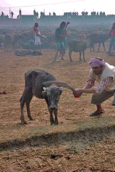 PLEASE SIGN AND REPIN!  5/22/12: The Killing Fields - End Animal Sacrifice In Nepal  I am so sick of killing in the name of religion!!!!!!!!!!!!