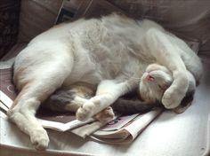 Sleepy adorable kitty!