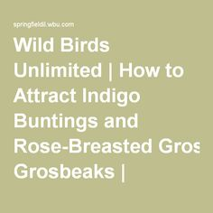 Wild Birds Unlimited | How to Attract Indigo Buntings and Rose-Breasted Grosbeaks | Springfield, IL