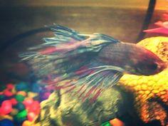 My fish, Niall!