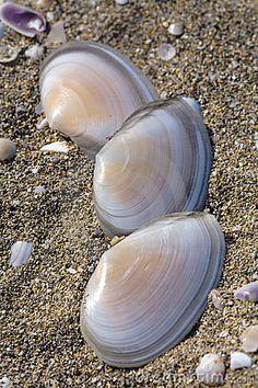 Shells in sand by Sergio Bertino, via Dreamstime