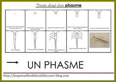 Dessine-moi un phasme ! Montessori Science, Petite Section, Album, Activities, Images, Step By Step Drawing, Moldings, Gardens, Insects