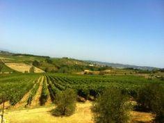 #Vineyards in Terricciola, #Tuscany (between Florence, Siena and Pisa)