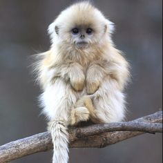 OK so I could love this monkey! No matter how scary some primates are!