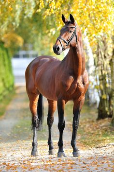 So regal!! #equine