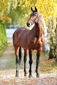 So regal!! #equine