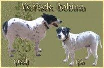 Zoo - servis a psí salon Jomáš | Moje práce