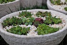 Lenka Tokarska – Google+ Succulents, Google, Succulent Plants