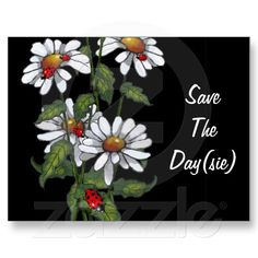 Daisies with Ladybugs: Flowers: Save the Day(sie) Post Cards: Available at www.zazzle.com