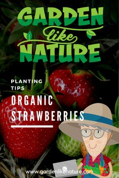 tips on growing organic strawberries in a backyard garden