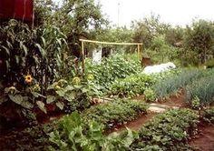 ПОЛЕЗНЫЕ СОВЕТЫ ДЛЯ ДАЧНИКОВ | Дачный сад и огород