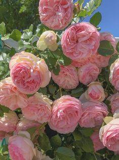 Красивые Сады, Красивые Цветы, Экзотические Цветы, Фиолетовые Цветы, Розовый Сад, Крытое Огородничество, Сахарные Цветы, Калла, Вьющиеся Розы